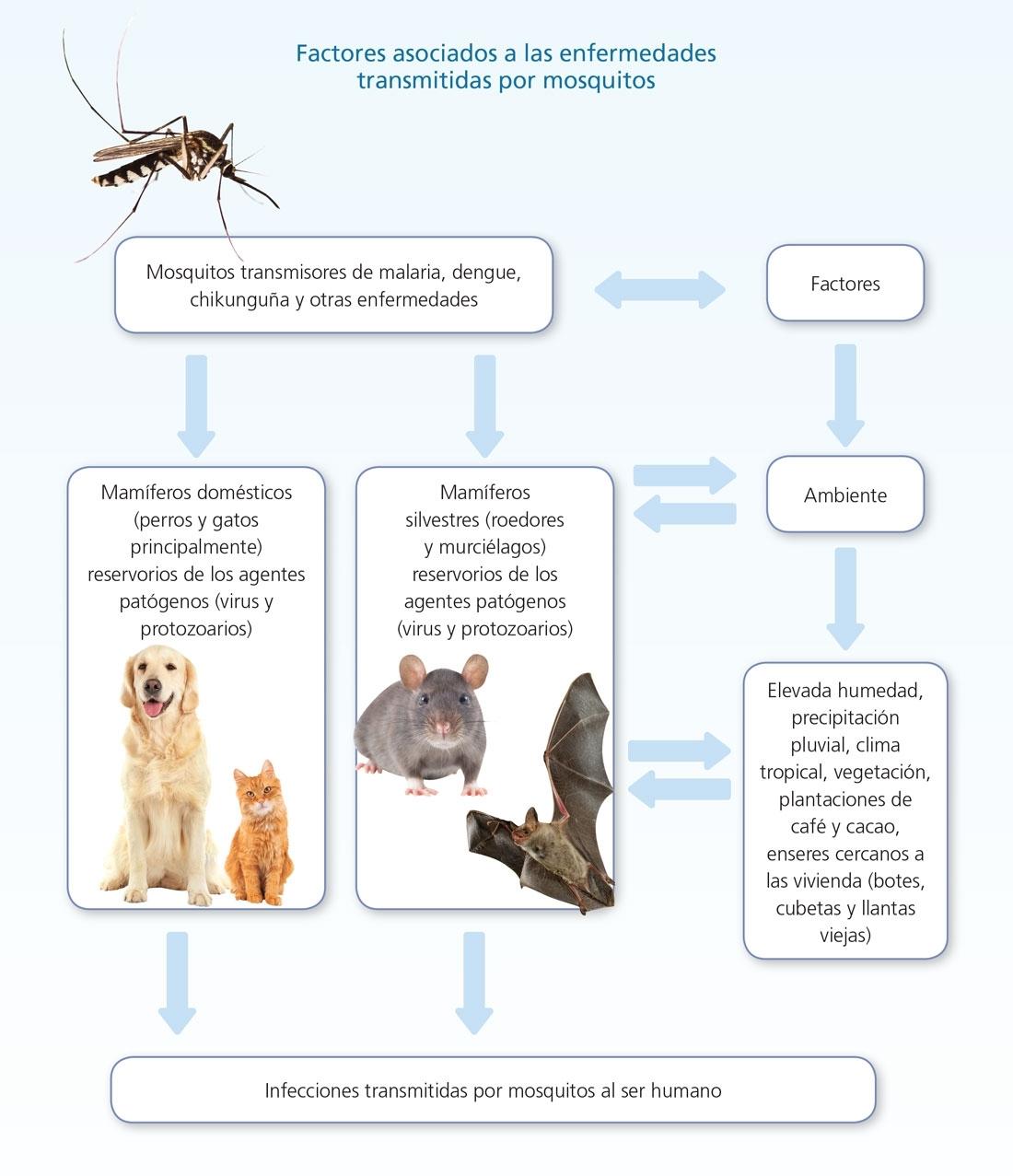 Planeta Mosquito with Nombre Escrito Del Dengue Dibujado