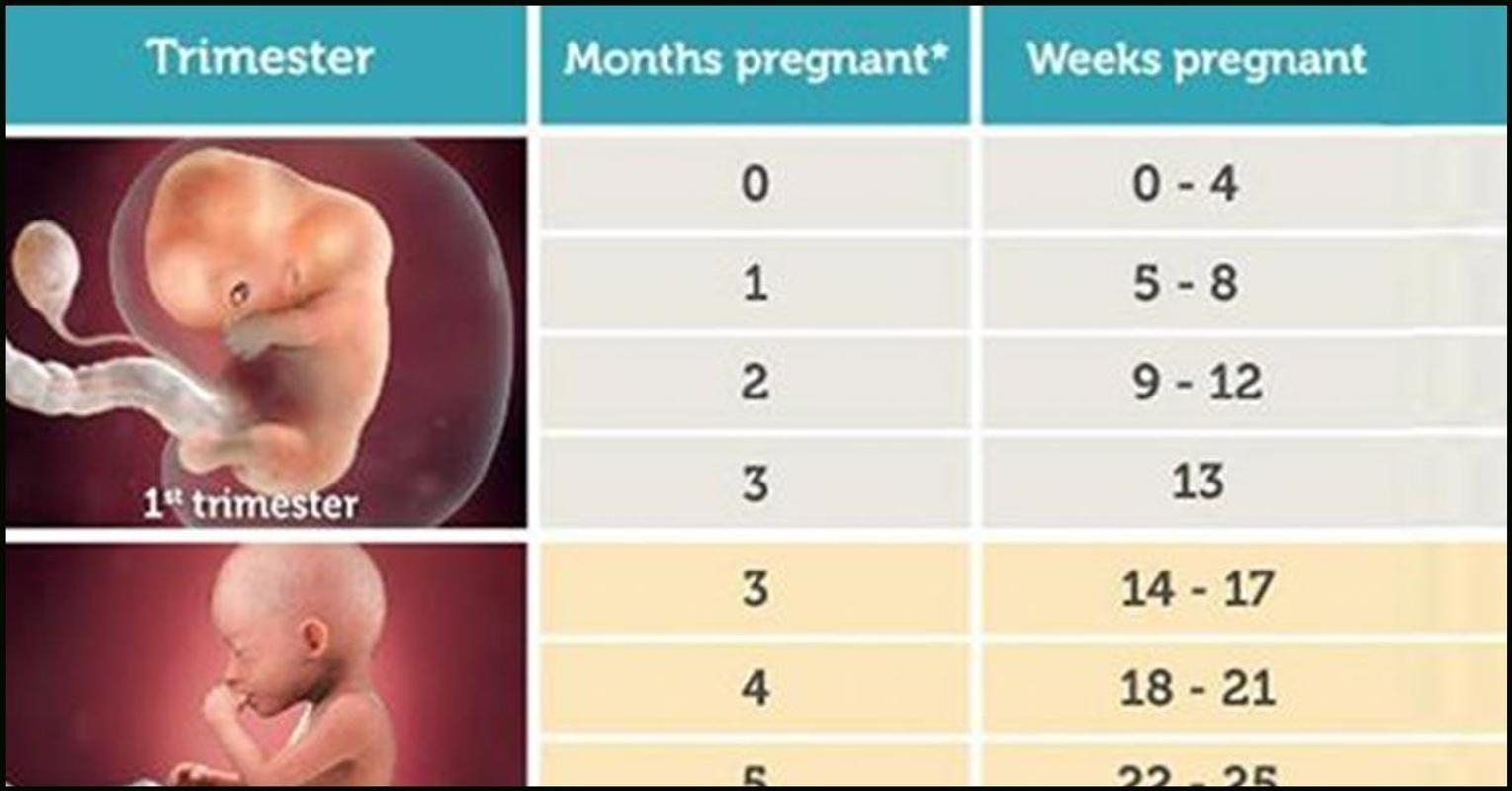 Pregnancy Calculator Dayday For Android - Apk Download inside Weeks Of Pregnancy Day By Day