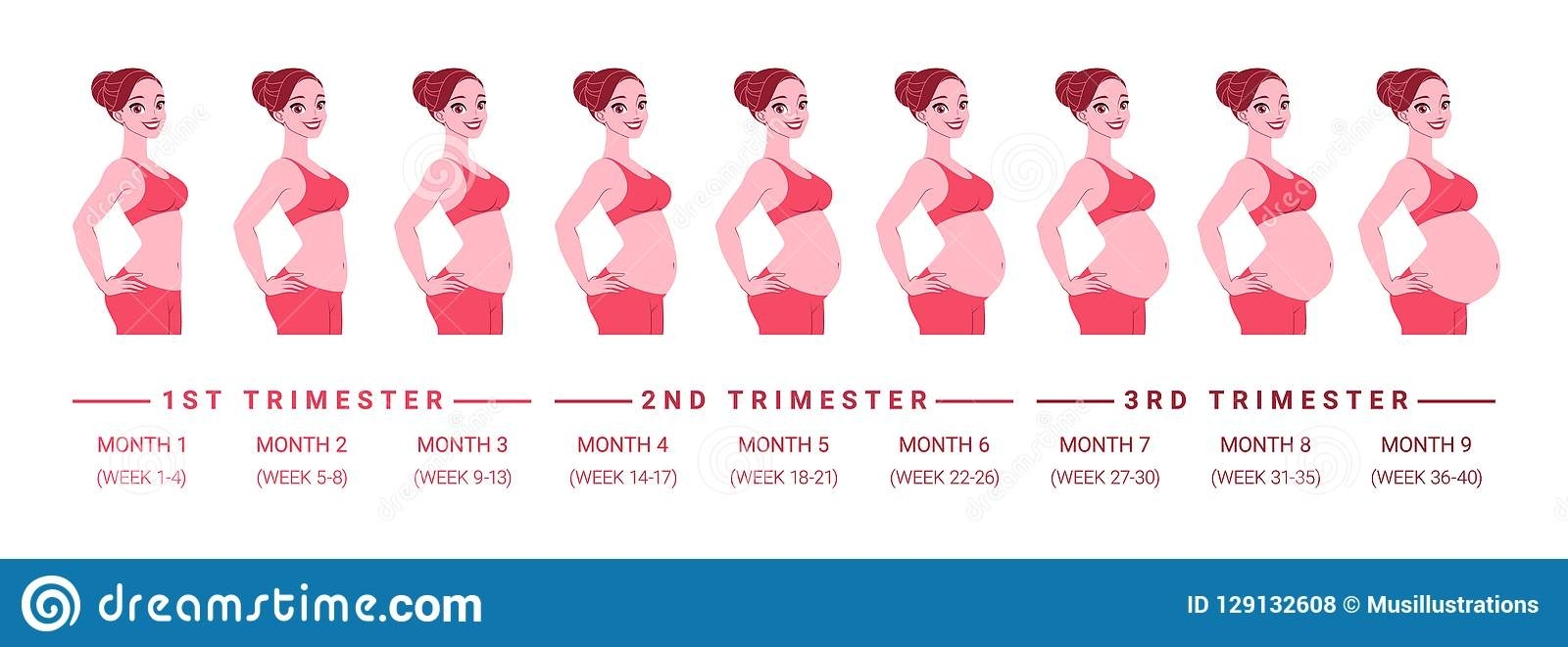 Pregnancy Stages Months And Weeks - Calendar Inspiration ...
