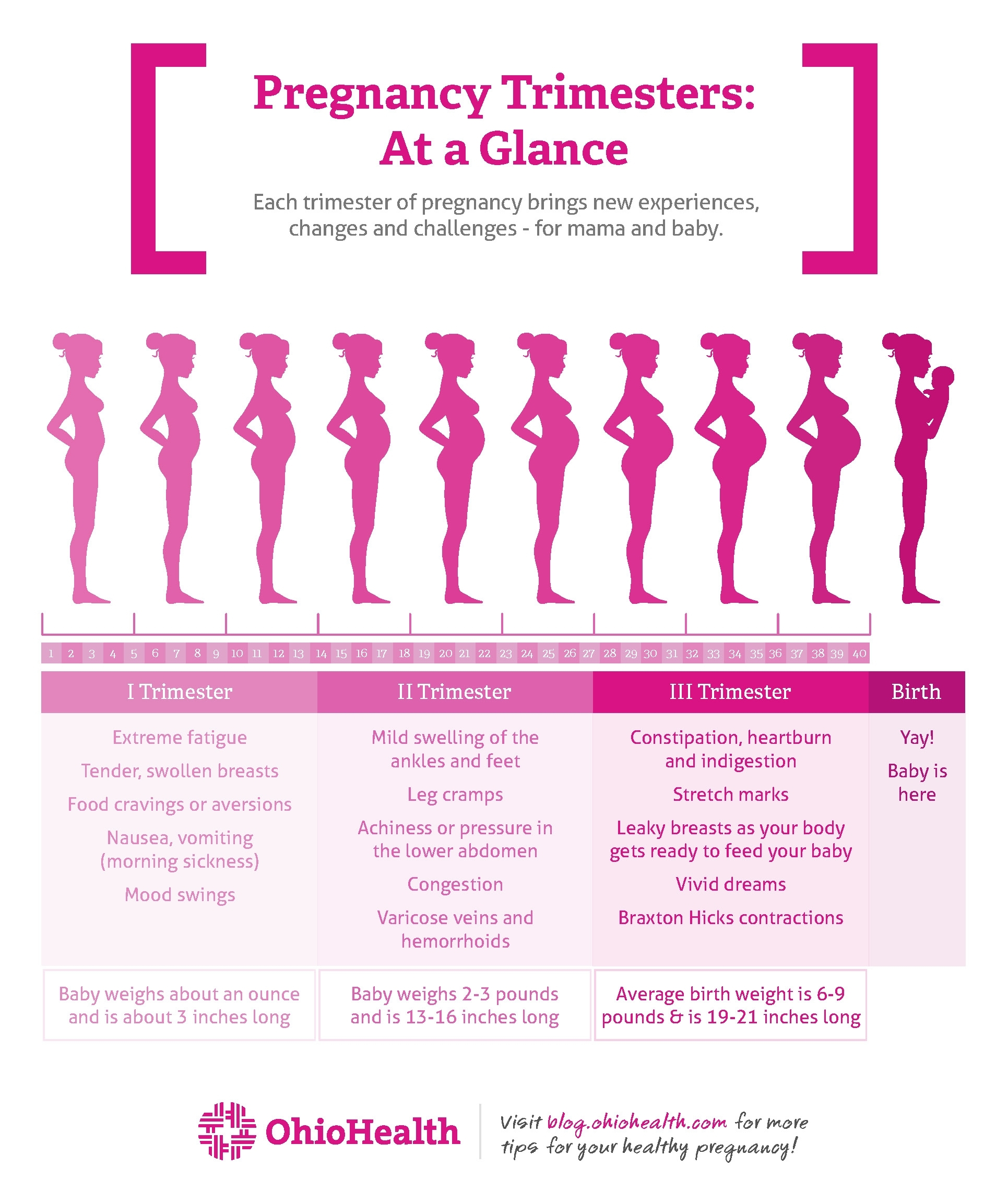 Stages Of Pregnancytrimester | Ohiohealth in Pregnancy Stages Months And Weeks