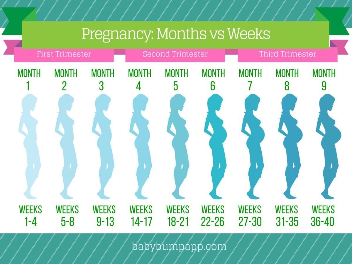 Pin On Baby Things throughout Month By Month Pregnancy Calendar