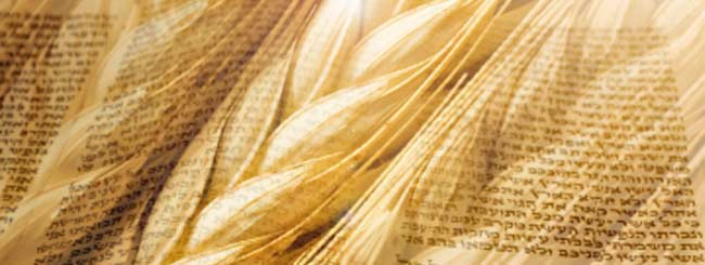 Self-Refinement And The Omer - Commentaries On The Torah - Video